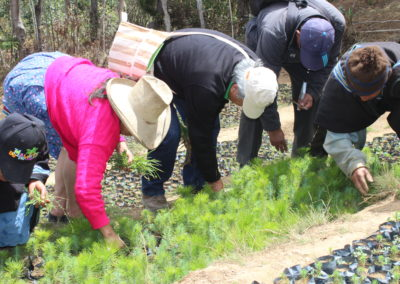 Community reforestation (Peru)