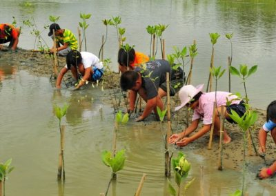 Mangrove restoration (Philippines)